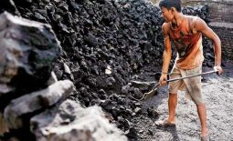 India's thermal coal imports rise over 14 pct in Q2 – trader